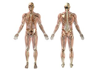 Massage and Holistic Training Courses - Anatomy and Physiology Image